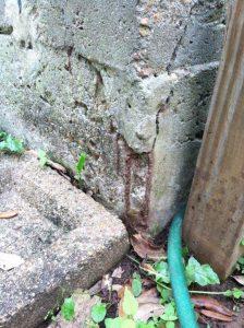 Termites Control Fort Bend - Termites Control Katy - Termites Control Rosenberg